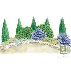 Композиция 4. Садовые ели